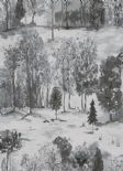 Into The Woods Roscoe Silver Grey Wallpaper 98562 By Holden